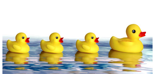 rubber-ducks-510